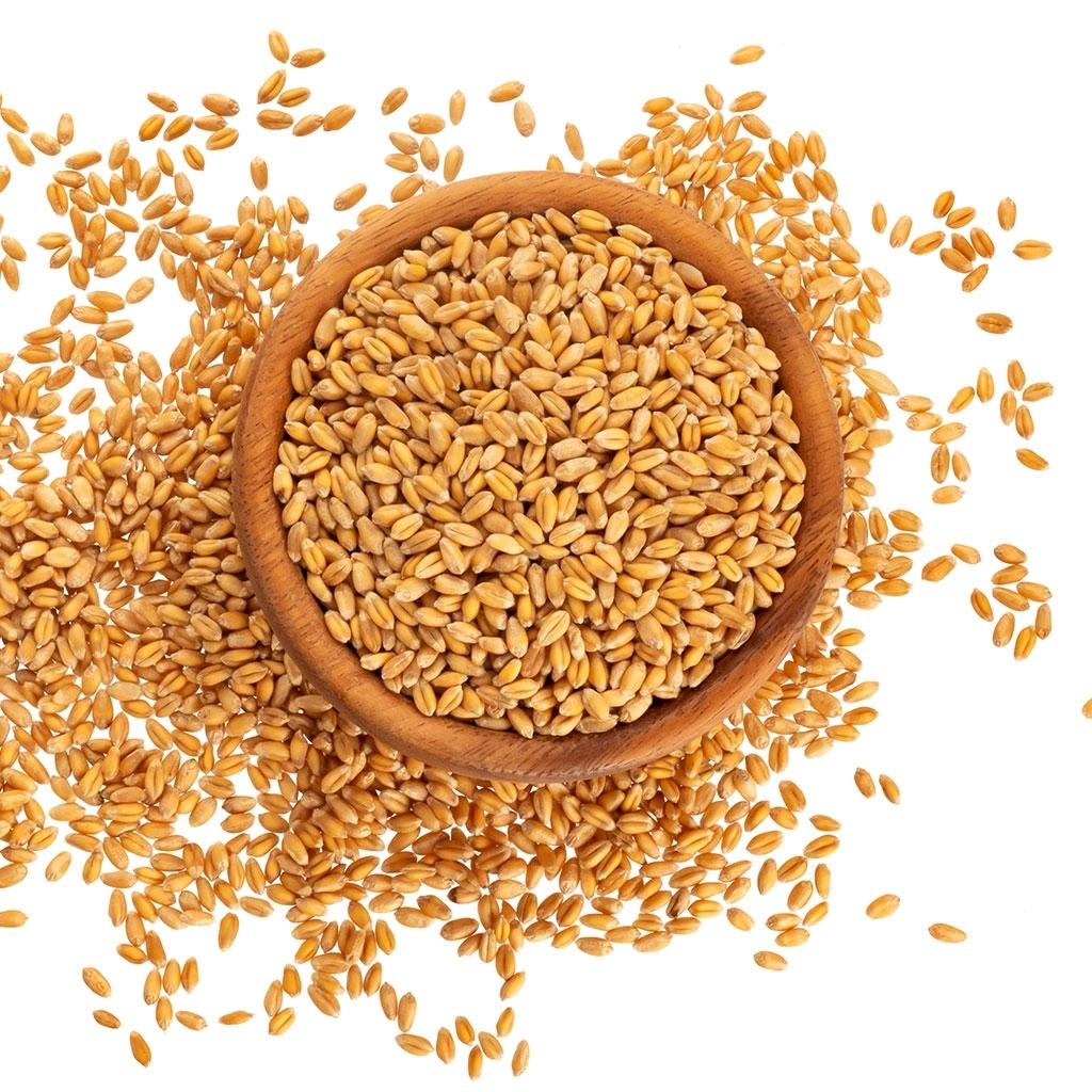 Buğday 1 Kg